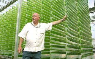 Станут ли водоросли биотопливом будущего?