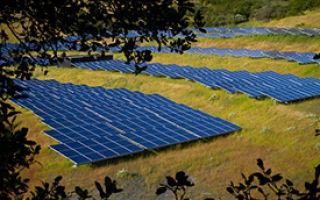 Солнечные батареи увеличат биологическое разнообразие
