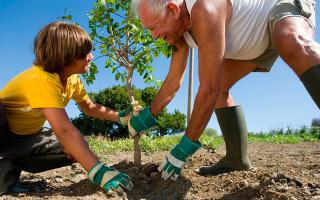 Ученые утверждают, что посадка деревьев — лучшее решение проблемы изменения климата