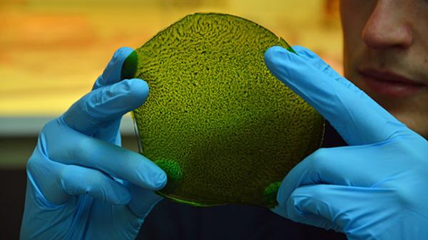 Искусственный лист синтезирует кислород с помощью воды и света