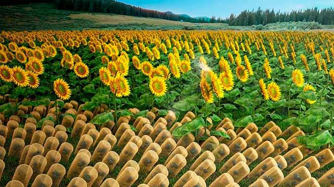 Полимер, способный двигаться за Солнцем как подсолнух, соберет до 90% энергии